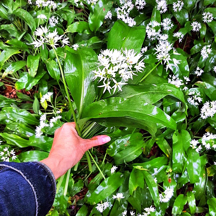 wild-garlic-food-to-glow.jpg